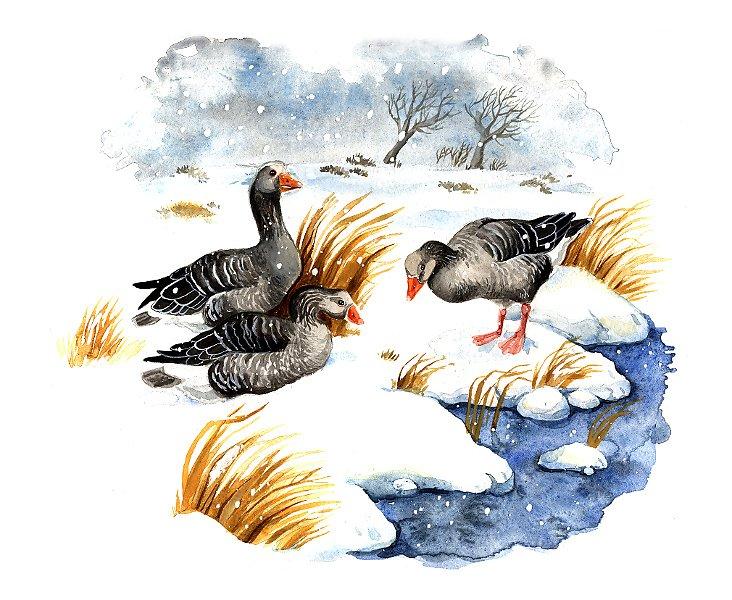 Bird calendar 2016