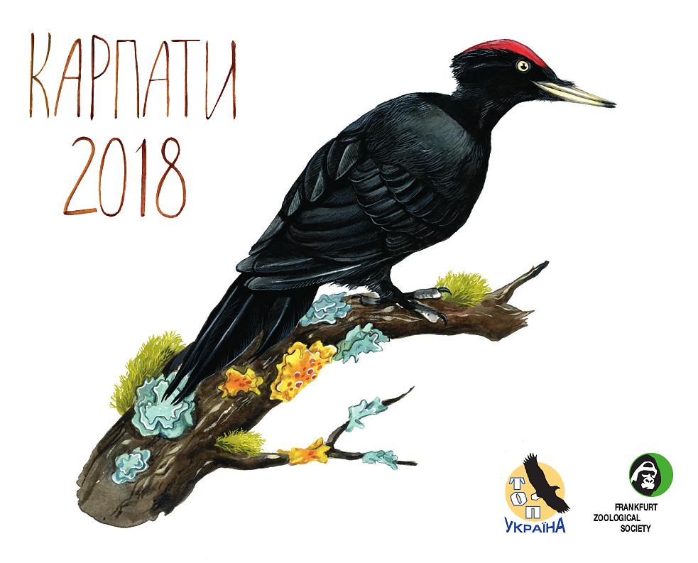 Cover: Black Woodpecker (Dryocopus Martius)