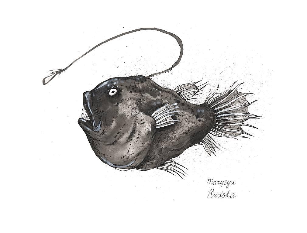 Deep ocean fish