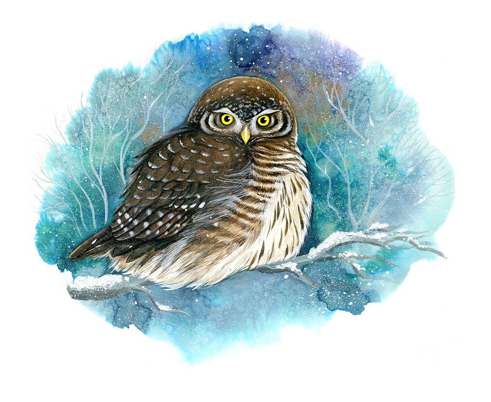 Eurasian pygmy owl ( Glaucidium passerinum)