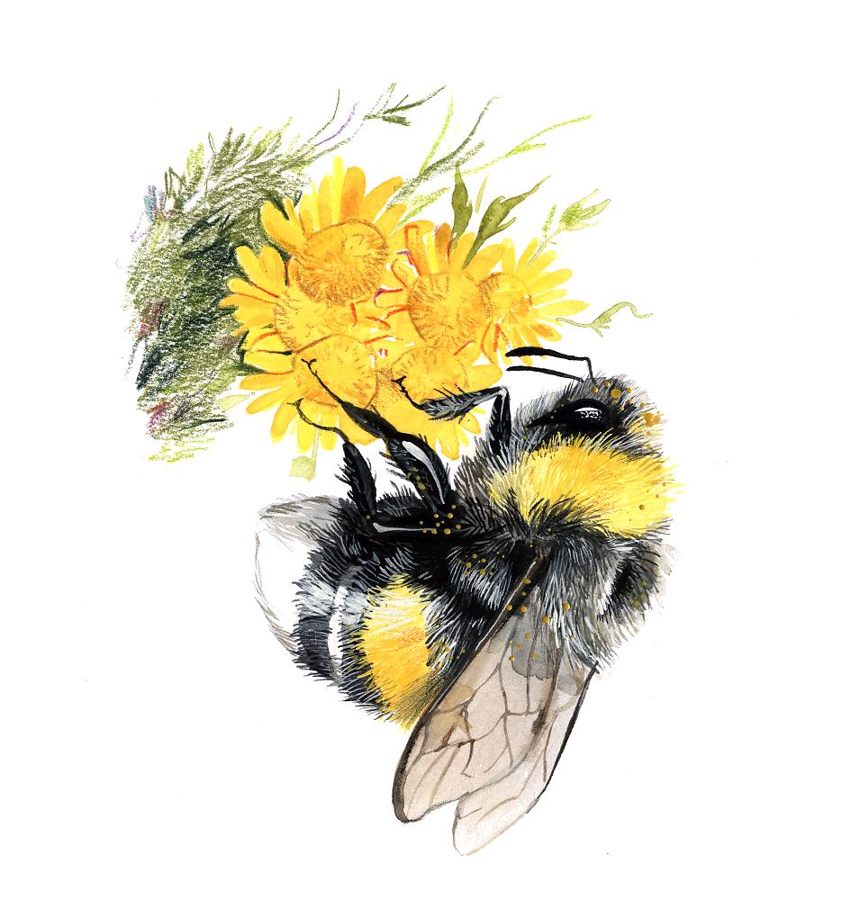 kunsht-bumblebee-3.png